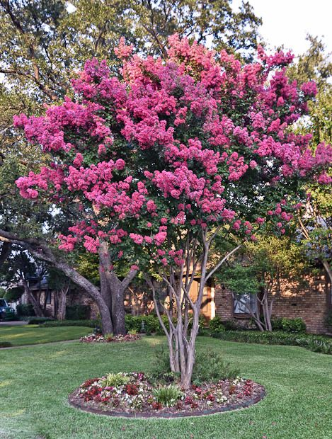 Ornamental Trees | Garden Design