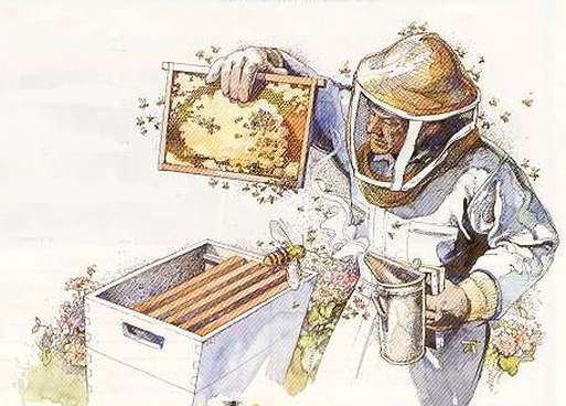 Strathcona Beekeepers Is A Site Devoted To Bees And Beekeeping. Included Is  An Extensive And Free Beekeepers Library And Bee Video Library.