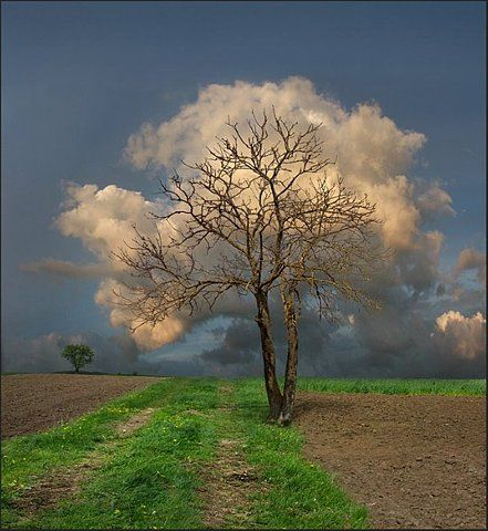 Clouds perfectly positioned behind a bare tree.