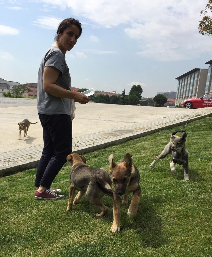 This is my mother feeding stray pups in Istanbul http://ift.tt/2sTwXVB