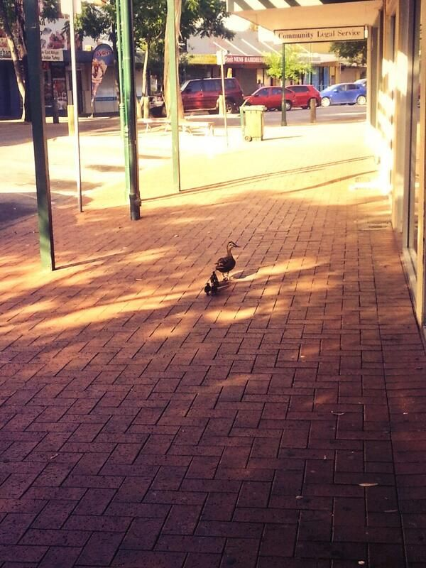 This picture of a family of ducks enjoying the choice on John Street was taken early this morning (02/12/13) by Bethanie Castell   @Beth Castell and shared via Twitter