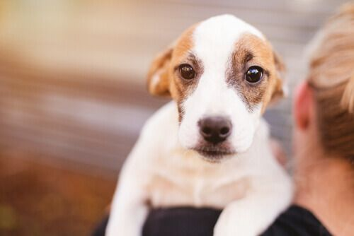 La torsione gastrica .... conosciuta anche come dilatazione gastrica, è un problema molto serio per gli animali che ne soffrono e, se non viene trattata per tempo, può essere letale. Si tratta di una distensione (infiammazione) acuto dello stomaco, che fa sì che questo si torca e l'organo sia strangolato. È un disturbo difficile da trattare, in special modo se non ci si rende conto per tempo che il nostro cane ne è affetto.