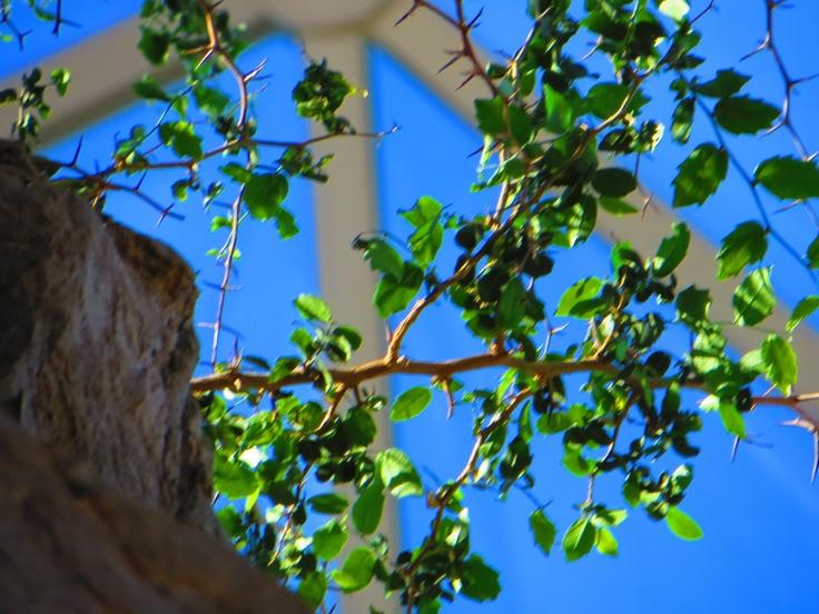 inside the desert dome, Omaha Zoo