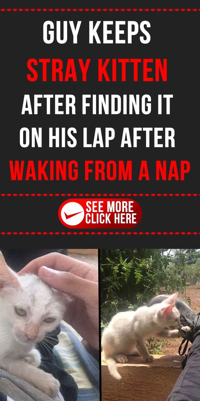 Guy Keeps Stray Kitten After Finding It On His Lap After Waking From A Nap Awesome Diy Idea Lifehack Ea Amazing Stories Weird World Weird Stories