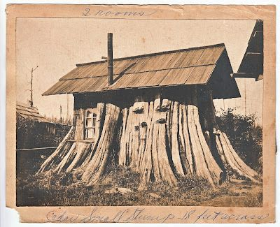 One of the first tiny dwellings, 2 rooms carved out of a cedar tree stump 18 feet across...photo 1 of 2.