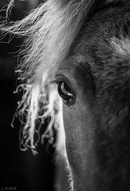 ocular reflection | Flickr - Photo Sharing!