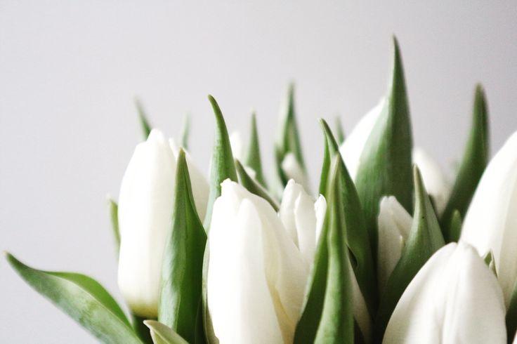 Witte tulpen | Peet likes