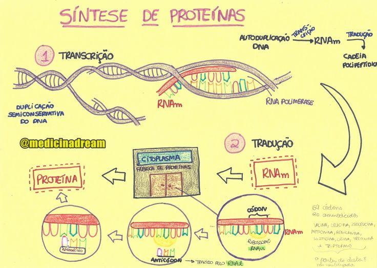 Resumo de Biologia : Síntese de Proteínas