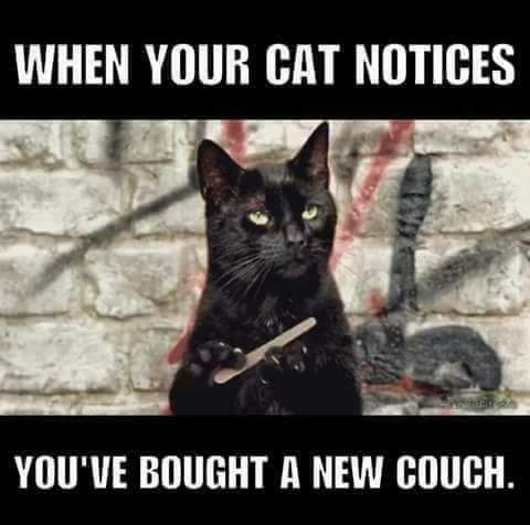 When your cat notices you've bought a new couch...