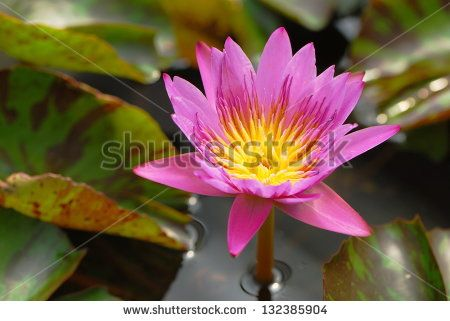 Flower images free stock photos download (10,975 Free stock photos) for commercial use. format: HD high resolution jpg images page (16/289)