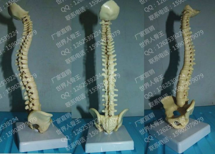 Маленькая модель тела позвоночника манекен человеческий скелет модель 23 см