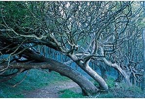 tessa traeger tree path