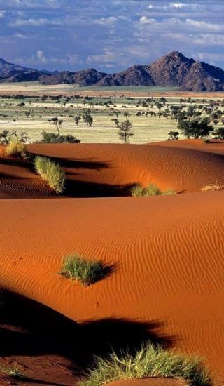 Tok Tokkie, désert du Namib - Namibie - Mark Twain : Il est plus facile de tromper les gens que de les convaincre qu'ils ont été trompés.  E' più facile ingannare la gente che convincere loro che sono stati ingannati.