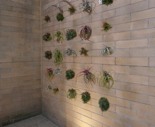 Superb Plant Hangers  convention Other Metro Contemporary Landscape Remodeling ideas with  Air Plant Chandelier Airplants green wall hanging airplants Landscape Architecture plant hanger
