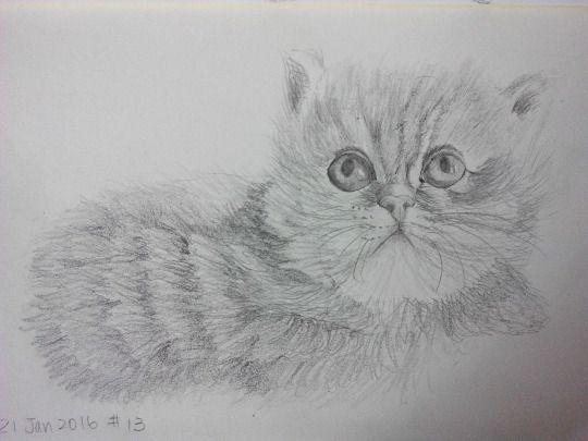 Cat sketching practice #013