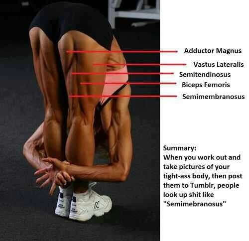1000+ images about Muscle Groups/Stretching on Pinterest