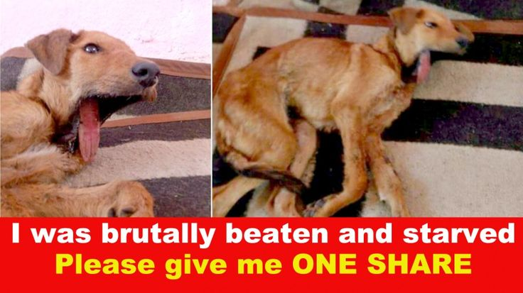 This harmless, gentle puppy has gone through an experience that no living creature deserves to endure. Please be part of the chan...