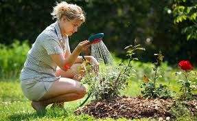 Image result for people watering plants