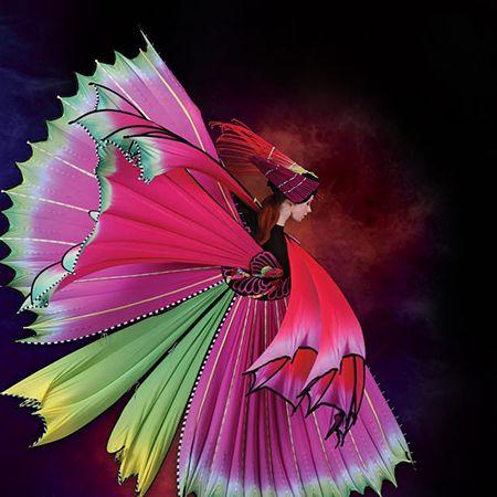 Firebird by Susan Holmes – Auckland