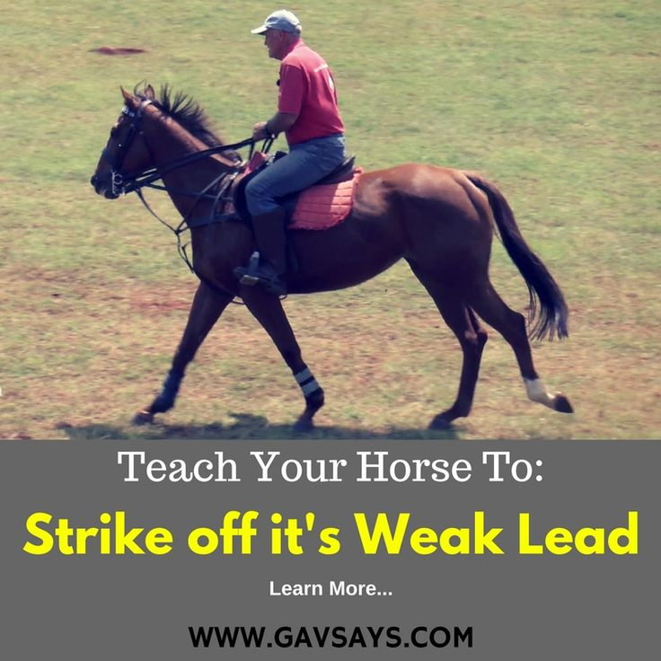 Here's how to teach a horse to Strike Off it's Weak Lead. Sometimes a horse is only comfortable off one lead & won't strike off the other, here some tips on solving that problem.