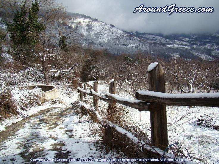 Winter scene in the mountains of Pelion  http://www.aroundpelion.com