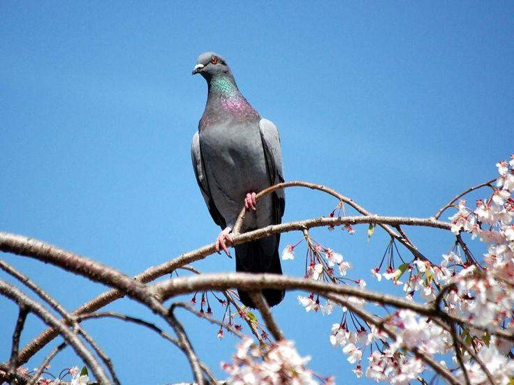 sfondi Uccelli per desktop: http://wallpapic.it/animali/uccelli/wallpaper-32852