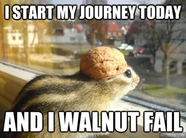 funny animal memes - Google Search AWWW I WANT THIS LITTLE GUY AS A PET, WHERE IS HE, WHERE HE BE AT e.e