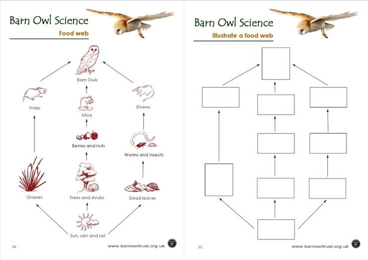 Draw a barn owl food chain food chains food webs for Food bar owl