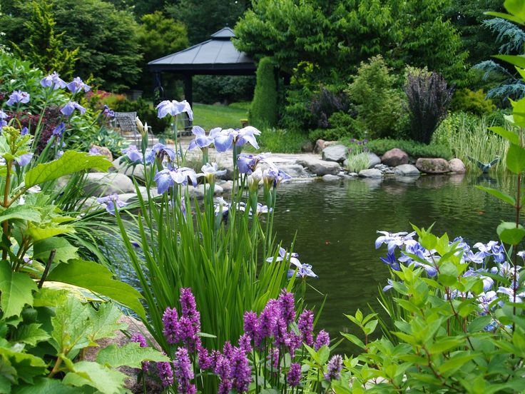 A small summerhouse and stone patio border this large pond for Large pond plants