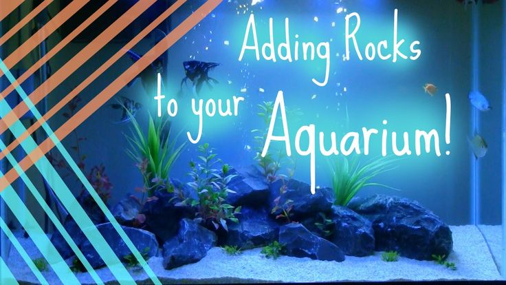 cheap fish tank decorations