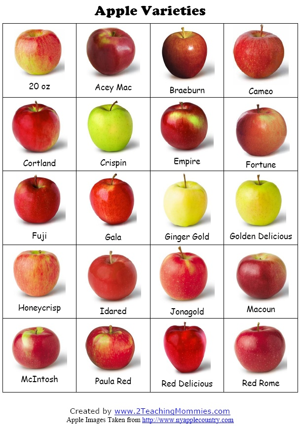 Apple themed ideas, lessons, activities. this would have ...