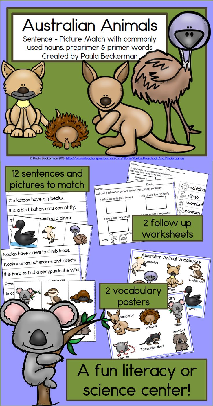 Your students will love learning facts about Australian animals and practicing sight words with Australian Animals Sentence Picture Match! This complete center includes 12 sentences and pictures to match, 2 vocabulary posters, 2 follow up worksheets, directions, and a leveled list of the sight words used.