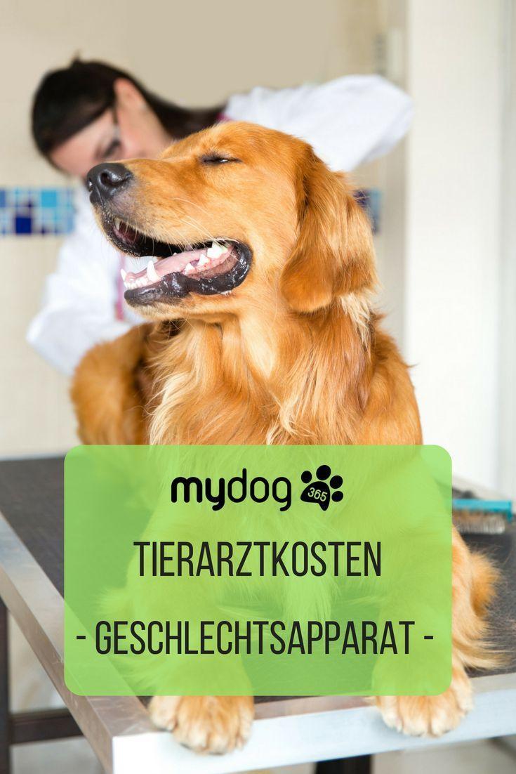 Hund Tierarzt Gesund Tiere Tierarzt Was Kostet Ein Hund