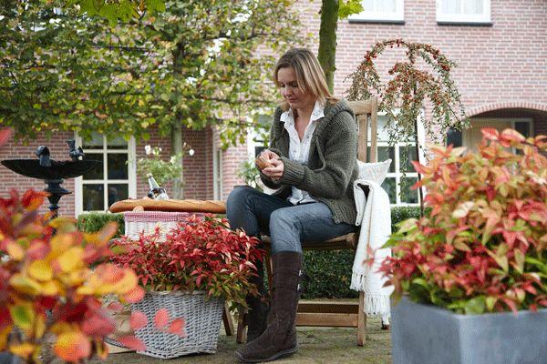 25 beste idee n over tuinieren in potten op pinterest groenten kweken glastuinbouw en - Groenten in potten op balkons ...