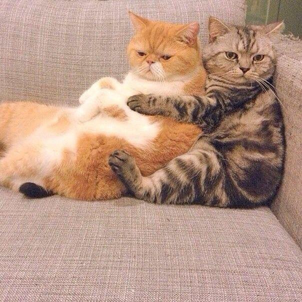 картинки вот так обниму тебя кошки предъявлять