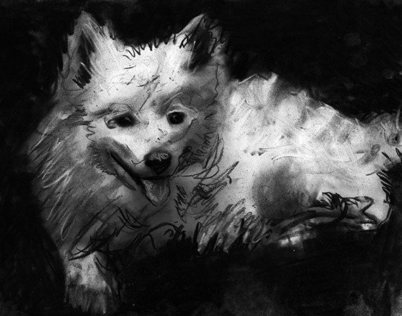 American eskimo dog gift, Charcoal Eskimo dog drawing,black and white dog art, Giclee dog print,Eskimo dog portrait, dog… #dogs #etsy #art