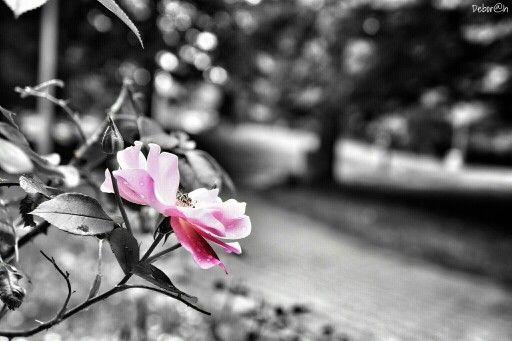 Sboccia il colore e rende bello perfino il grigiyme di quest'epoca. #Vigevano #Colorsplash #Nature
