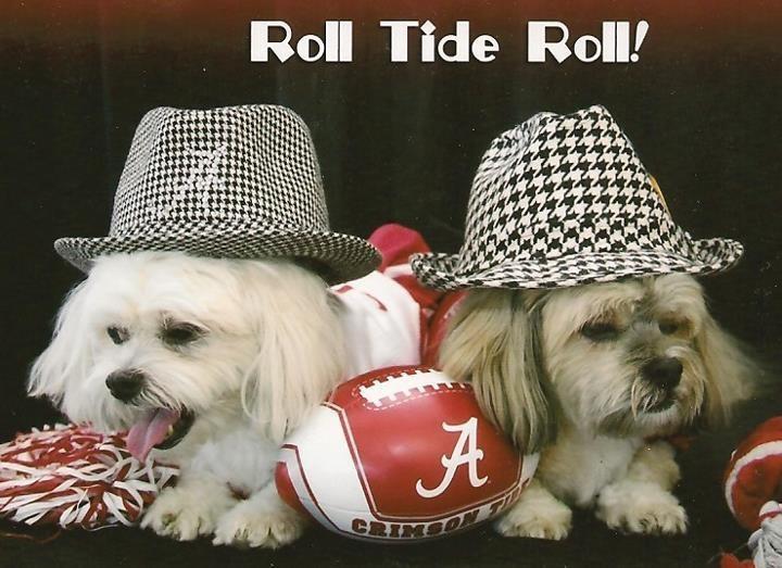 RTR: Tide Rolls, Alabama Fans, Alabama Rolls, Alabama Football, Rolls Tide, Crimson Tide Rtr, Alabama Crimson, Alabama Things, Alabama Stuff