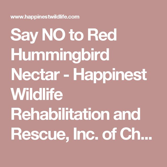 Say NO to Red Hummingbird Nectar - Happinest Wildlife Rehabilitation and Rescue, Inc. of Chattanooga, Tennessee