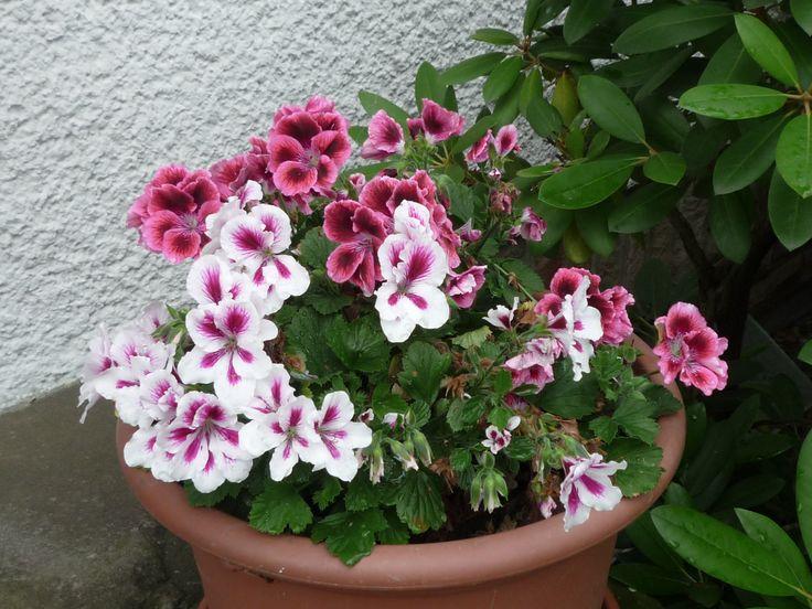 Schöne Blumen | Blumen & Garten | Pinterest