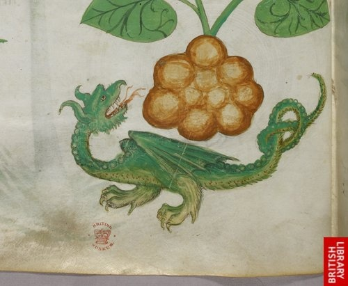 Dragon, from 'Tractatus de Herbis', Lombardy c.1440 (Codex Sloane 4016 in the British Library).
