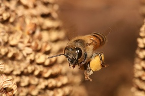 IL SEGRETO DELLA VITA IN UN GRANELLO DI POLLINE: Bees Pollen, Body Parts, Most Popular, Waves, Rivers T-Shirt, Plants, Baskets, Flowers, Honey Bees