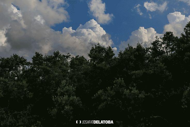 Wind dance #josafatdelatoba #cabophotographer #holbox #landscapephotography #mexico #quintanaroo