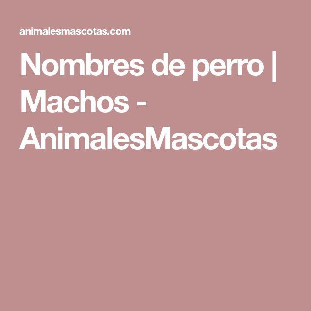 Nombres de perro | Machos - AnimalesMascotas