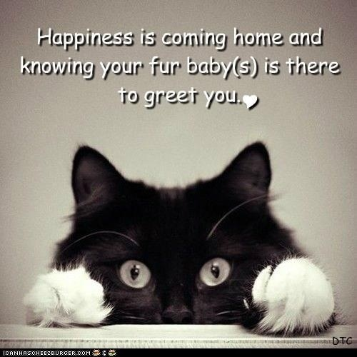 pets: Cats, Babies, Animals, Pet, Coming Home, Fur Babies, Fur Baby, Kitty, Cat Lady