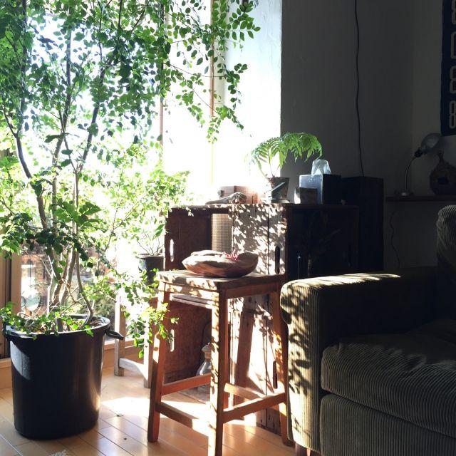 keikoさんの、TRUCK,FK,truckfurniture,キャベツボックス,トネリコ,観葉植物,NO GREEN NO LIFE,古いもの,ヴィンテージ,漆喰,流木,アンティーク,vintage,グリーン,ジャンク,植物,のお部屋写真