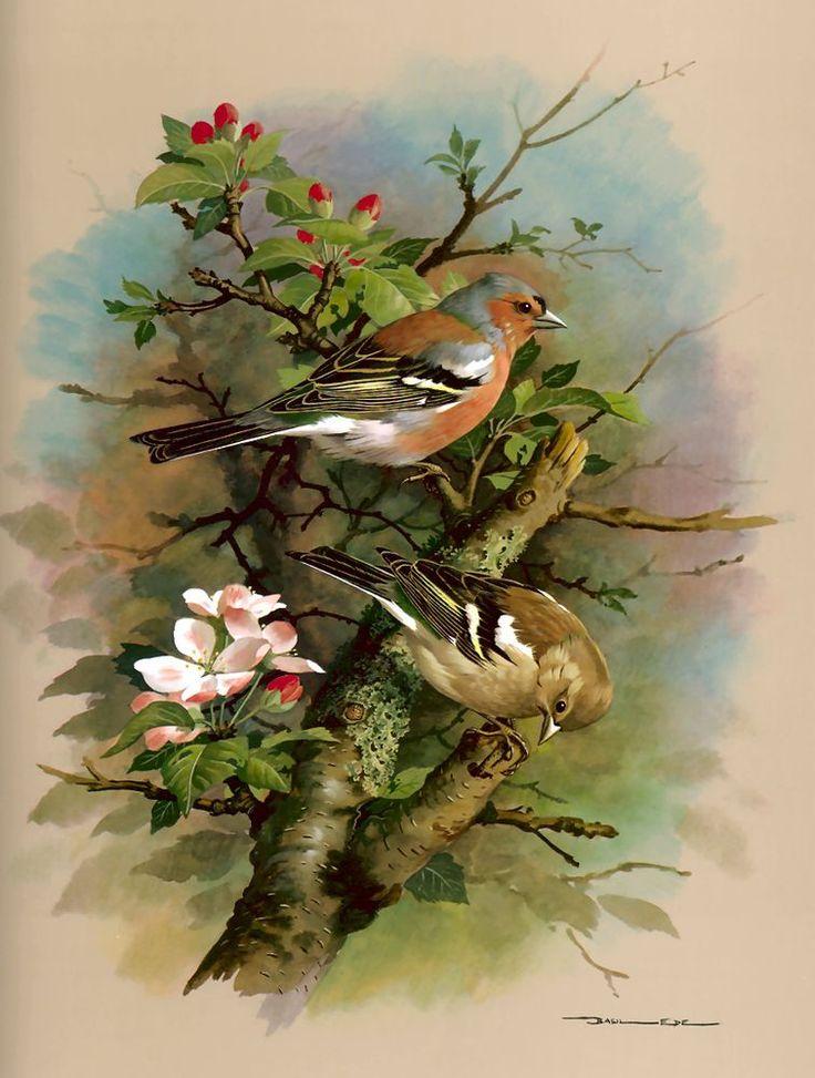 Птицы от английского живописца Basil Ede - Ярмарка Мастеров - ручная работа, handmade