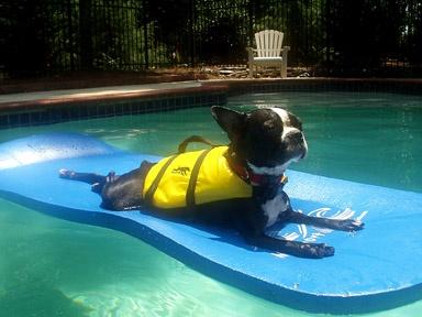 Auch Hunde lieben Feiertage! #mariahimmelfahrt #feiertag #see #seaside