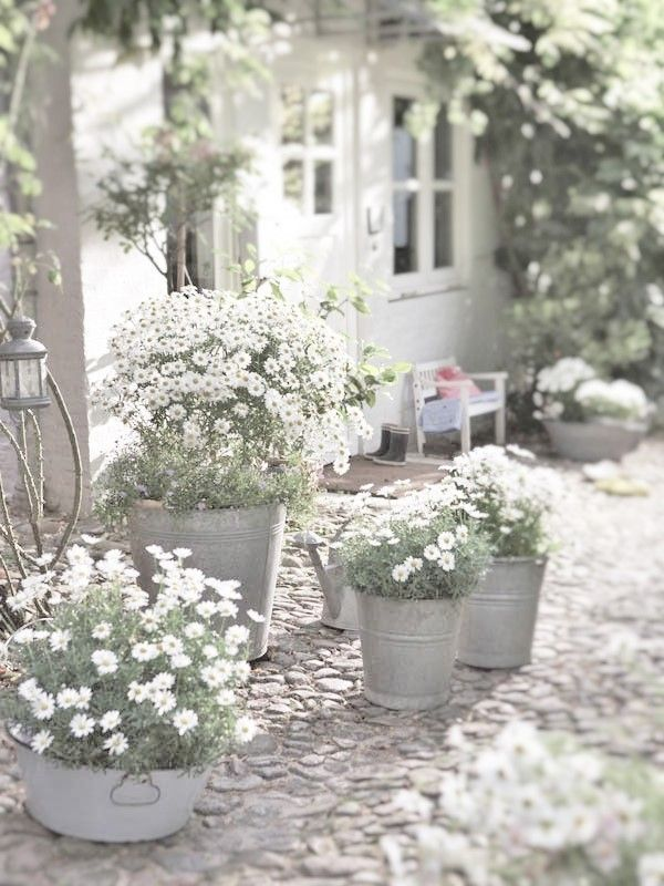 White daisies with white bacopa at the base in galvanised tubs and buckets on the bedroom deck