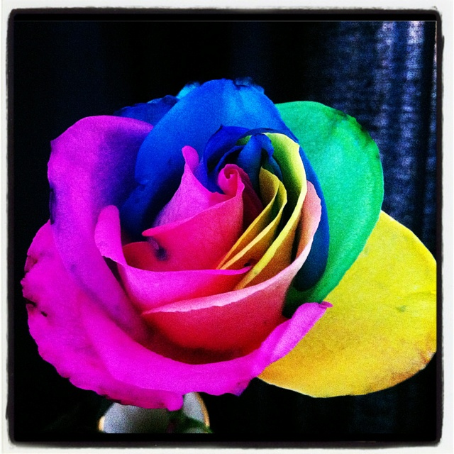 16 best tie dye flowers images on pinterest rainbow for How to make tie dye roses